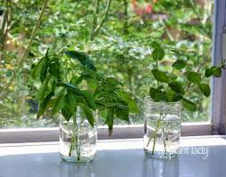 Herbs Indoors How To Grow Herbs Peeinn Com