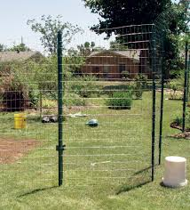 screen of green add privacy and fragrance to your yard state by