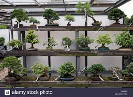 bonsai trees stock photos bonsai trees stock images alamy