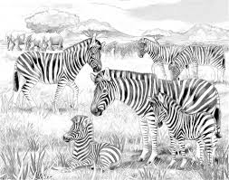 safari zebras and elephants coloring page illustration for