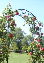 Arched Trellis Leander U0027s Lovely Rusted Iron Rose Arch Has A Traditional