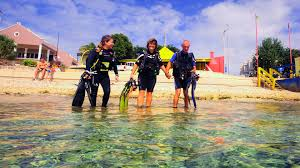 bonaire delfins shore diving jpg