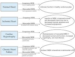 jcdd free full text midkine u0027s role in cardiac pathology html