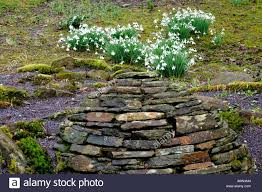 galanthus u0027james backhouse u0027 snowdrop with stone wall sculpture
