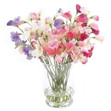 artificial sweet peas in flared vase height 30cm pavilion broadway