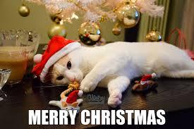 Merry Xmas Meme - merry christmas steemit