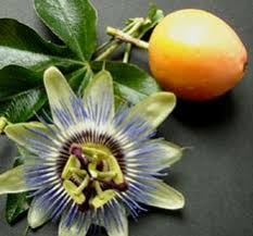 flower fruit yucatan flora mayan forest and mayan sacred trees fruits