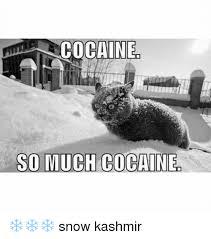 So Much Cocaine Meme - cocaine so much cocaine snow kashmir cocaine meme