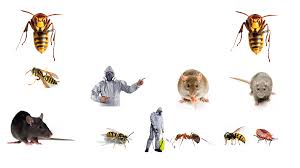 pest control banner my cms