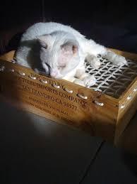 293 best animals furry images on pinterest cat stuff cat