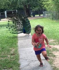 Yellow Raincoat Girl Meme - girl running away from a peacock becomes an internet sensation