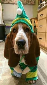 5839 best dogs and puppies images on pinterest animals bassett