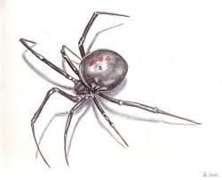 17 Best Images About Spider - dinner for a 3d spider clipart