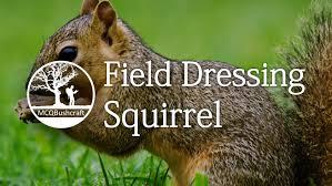 field dressing game grey squirrel youtube