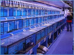 aquariums tropical fish marine fish