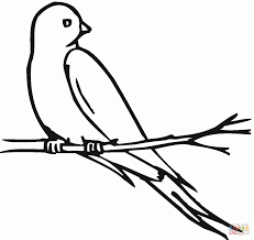 swallow 8 pattern coloring page animal drawings of swallows