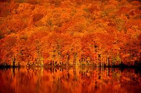 calm after the storm as beauty spot pond blazes in autumn colors