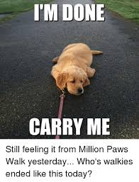Carry On Meme - i m done carry me still feeling it from million paws walk yesterday