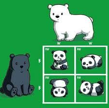 Biology Memes - punnett bear i mean punnett square biology memes