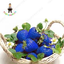 Plants Easy To Grow Indoors Online Buy Wholesale Grow Strawberries Indoors From China Grow
