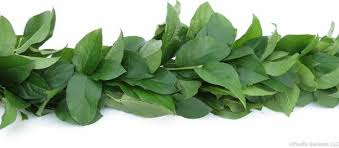 salal fresh premium garland by pacific garland pacific garland llc