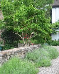 garden designers roundtable underused plant s miss rumphius