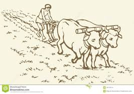 agricultural coloring pages