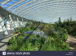 National Botanical Garden Of Wales The Great Glasshouse National Botanic Garden Of Wales Stock Photo