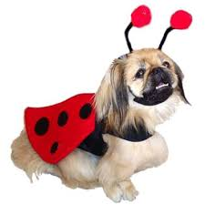 Large Halloween Costumes Halloween Dog Costumes Small Dog Costumes Large Dog Costumes