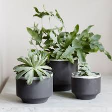 plant stand indoor plant stands plants best ideas on pinterest
