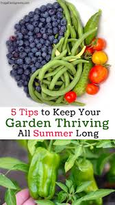 5 tips to keep your garden thriving this summer