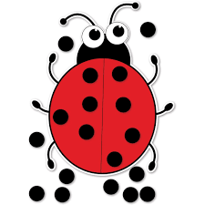 giant magnetic ladybird from early years resources uk