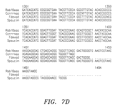 patent ep0804081b1 root stimulating bacteria google patents