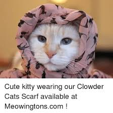 Cute Kitty Meme - cute kitty wearing our clowder cats scarf available at