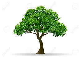 tree and leaf tree branch realistic tree tree vector royalty free