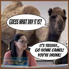 Hump Day Camel Meme - images hump day camel meme mike