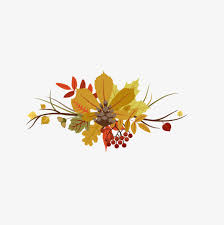 thanksgiving material thanksgiving floating material flowers akiba autumn png and