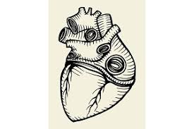 isolated human heart outline sketch graphics creative market