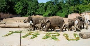 werden jungtiere geschlagen kritik an elefantentraining im zoo