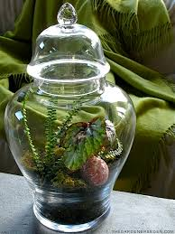 terrariums the gardener u0027s eden