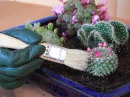 mini cactus garden the gardens