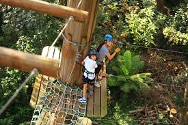 sydney the hills treetops sydney trees adventure blue mountains australia