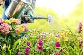 cura giardino 4 cose da fare per la cura giardino a marzo pollicegreen