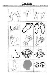 the body cut u0026 paste worksheet