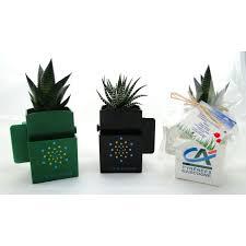 plante d駱olluante bureau cadeau publicitaire végétal offrez une plante de bureau
