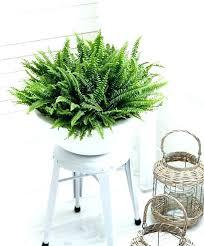 indoor garden lights home depot indoor plant l adjustable led grow light by professional plant