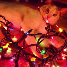 18 best christmas kittens lights images on pinterest