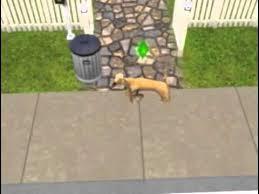sims 3 boxer dog sims dog youtube