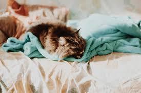 Schimmel Schlafzimmer Hinter Bett Schimmel Im Schlafzimmer Ist Gefährlich Ursachen Erkennen U003e Was Tun