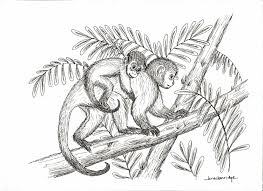 realistic monkey drawing daily graphics inspiration 556 most